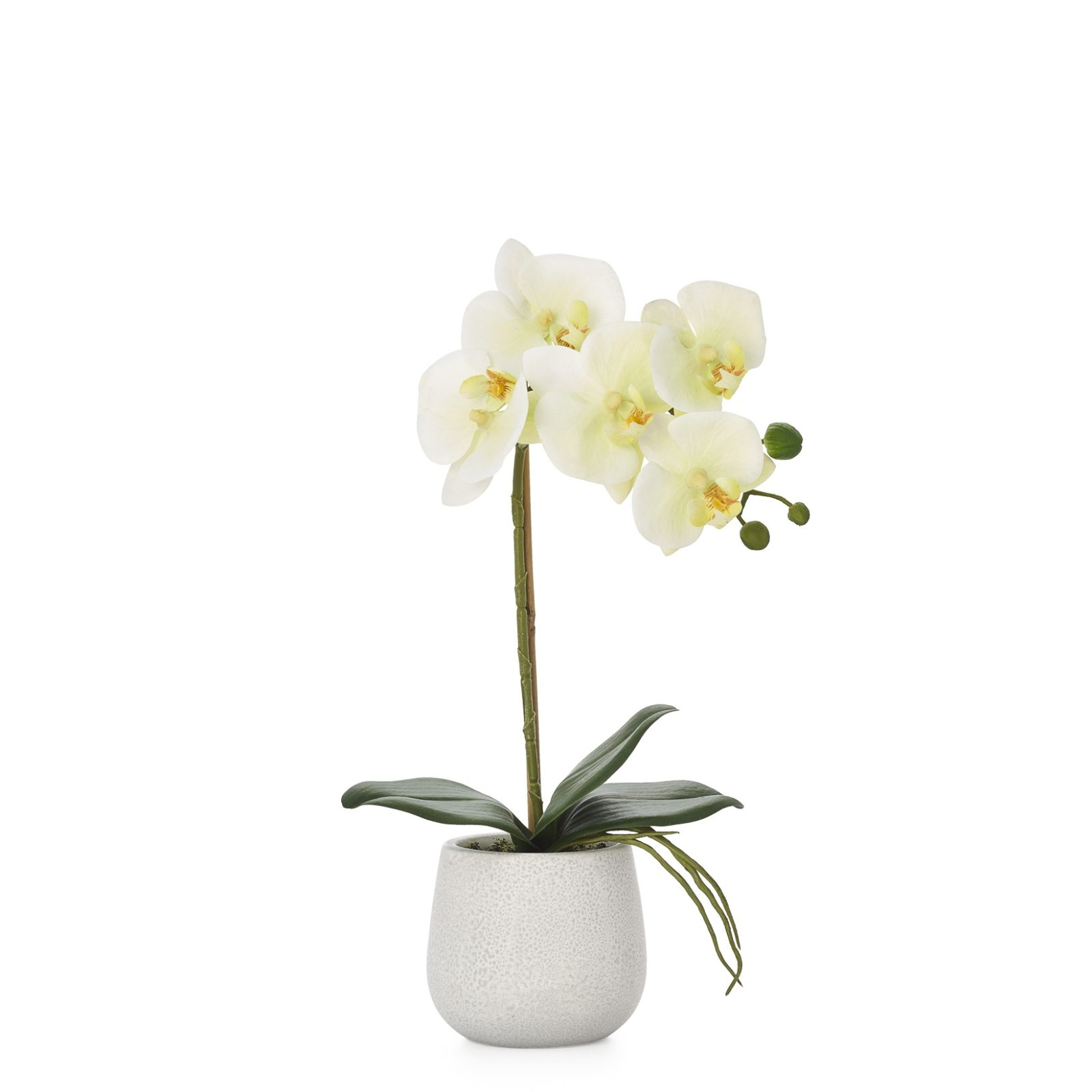 Elegant Orchid Yellow Single Stem | alvaluz.com