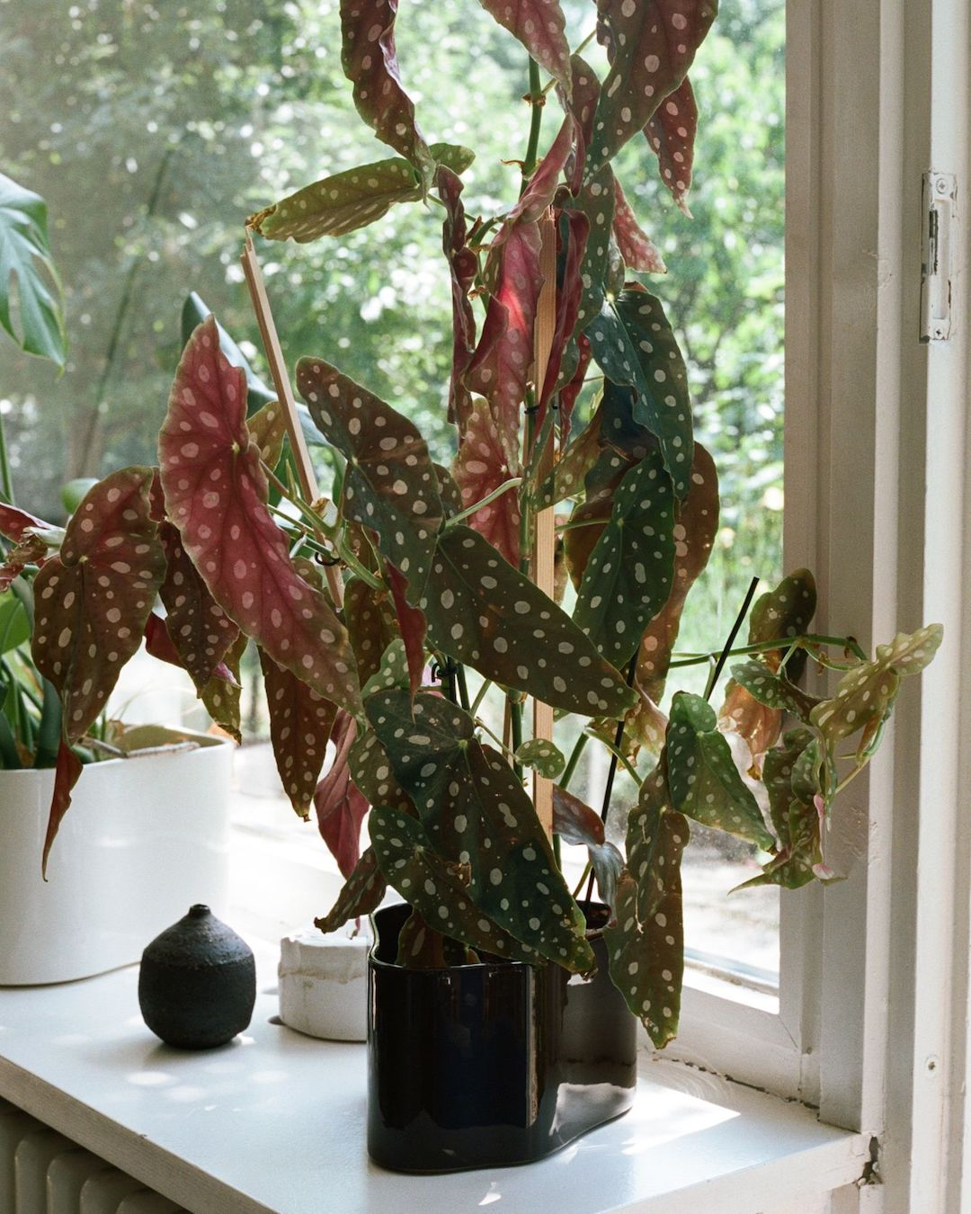 Riihitie Plant Pot A | alvaluz.com